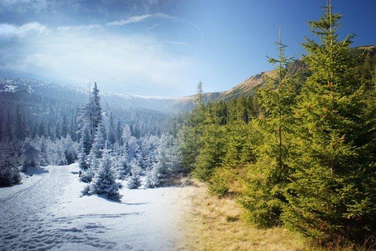 diferentes temporadas, otoño, invierno, primavera, verano